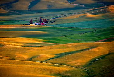 Golden Palouse by DawsonImages