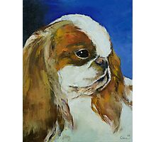 English Toy Spaniel Photographic Print