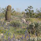 cactus landscape by Bonnie Pelton