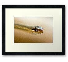 Ribbon Snake Framed Print
