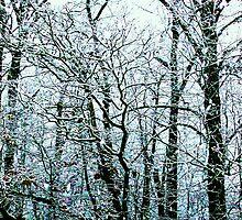 PEACEFUL SNOW by Terra 'Sunshine' Gilbert