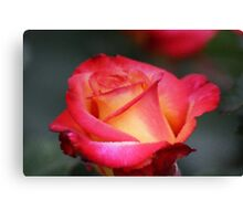 Softly Distorted Canvas Print