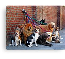 Dogs Canvas Print