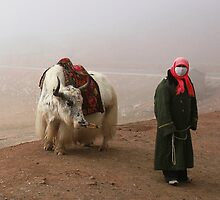 Leading The Yak by megsphotos