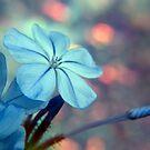Blue by Beth A