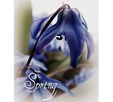 Springs Little Joys  Photographic Print