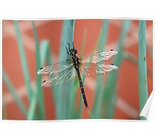 Dragonfly content on Shallots Poster