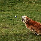 saz chasing after the ball by xxnatbxx