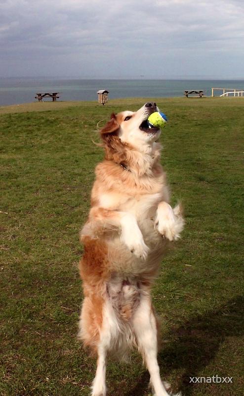 saz reaching for the ball by xxnatbxx