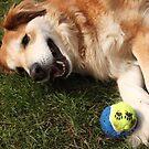 saz laying...next to the ball by xxnatbxx