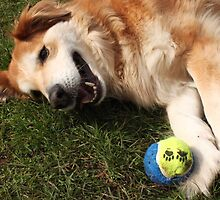 saz laying...next to the ball by xxnatbxx