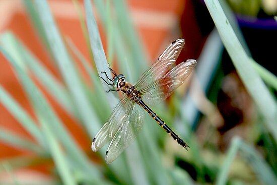Dragonfly on Shallots 2 by MoonlightJo