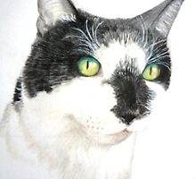 Mr Frodo - black and white shorthaired rescue cat by Martina Newton