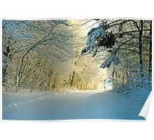 Winter forest road in warm sunset light Poster