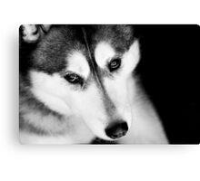 Portrait of a Husky Canvas Print