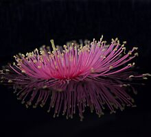 Pink Spider by Wendi Donaldson