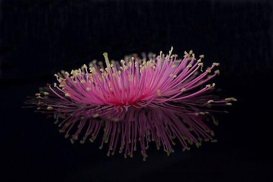 Pink Spider by Wendi Donaldson Laird