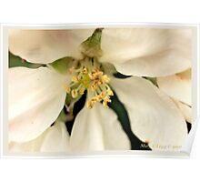 Apple blossom B Poster