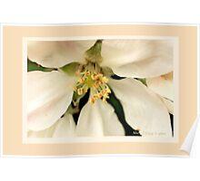 Apple blossom D Poster