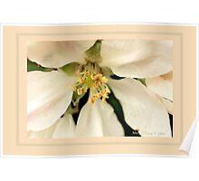 Apple blossom E Poster