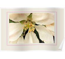 Apple blossom J Poster