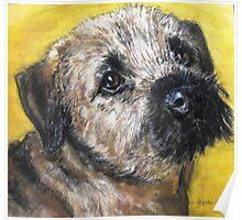 Poppy, border terrier Poster