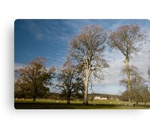 Irish Blue Skies and Oak Trees Metal Print