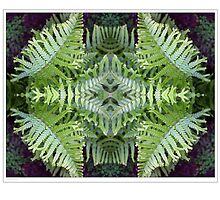 Fern Pattern by Paul Barrington
