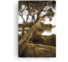 Paperbark with Rocks Canvas Print