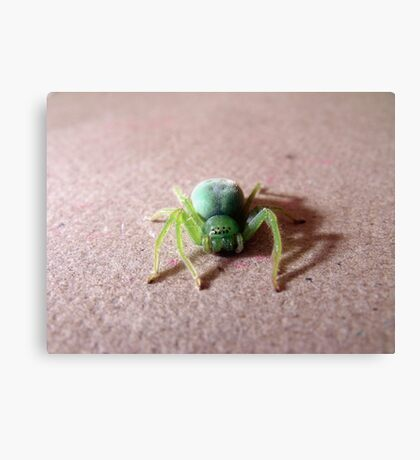 Face to Face with a Green Sparassid... Canvas Print