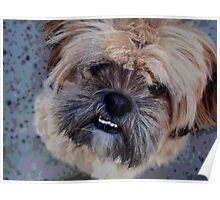 Bucked-toothe pooch Poster