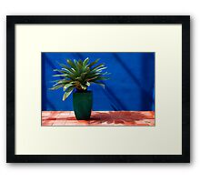 Miami Hothouse Framed Print