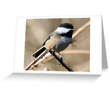 Chickadee Sunbath Greeting Card