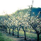 Brosi Orchard by Jessica Hardin