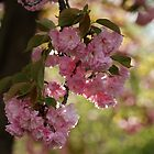 Clusters of Pink by Ruth Lambert