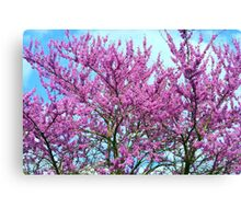 Redbud Trees - Welcome Spring! Canvas Print