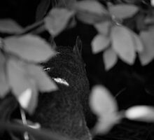 Squirrel in the bush by Roberto Irace