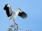 White Stork On Snow Covered Tree by Henry Jager