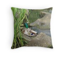 Mallard Drake Getting Comfy. Throw Pillow