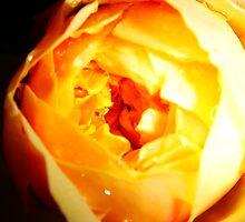 Burning Rose by Charlotte Evans