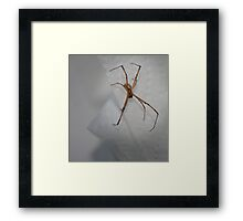 Spider In My Sink! Framed Print