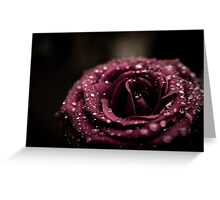 Raindrops On Violet Rose Greeting Card