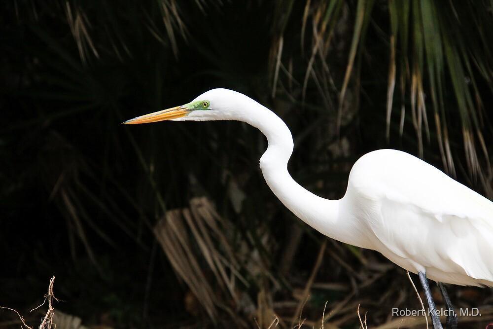 Great egret by Robert Kelch, M.D.