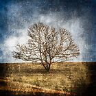 """Tree on Hill """"Textured"""" by Carlos Restrepo"""