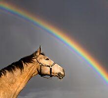 under the rainbow by Dan Shalloe