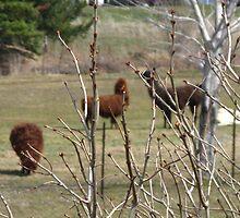 Spring Buds & Incidental Ungulates by artwhiz47