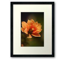 In-door flower Framed Print