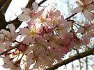 Spring Blossom by rhian mountjoy