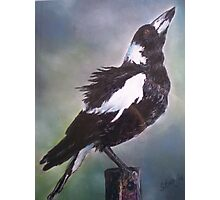 Magpie Glory Photographic Print