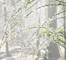 Elegance Of A Springtime Morning by NatureGreeting Cards ©ccwri